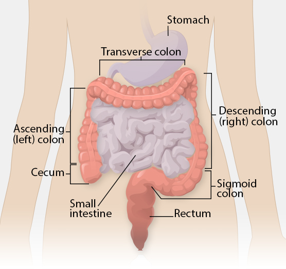 Colorectal Cancer Arkansas Department Of Health